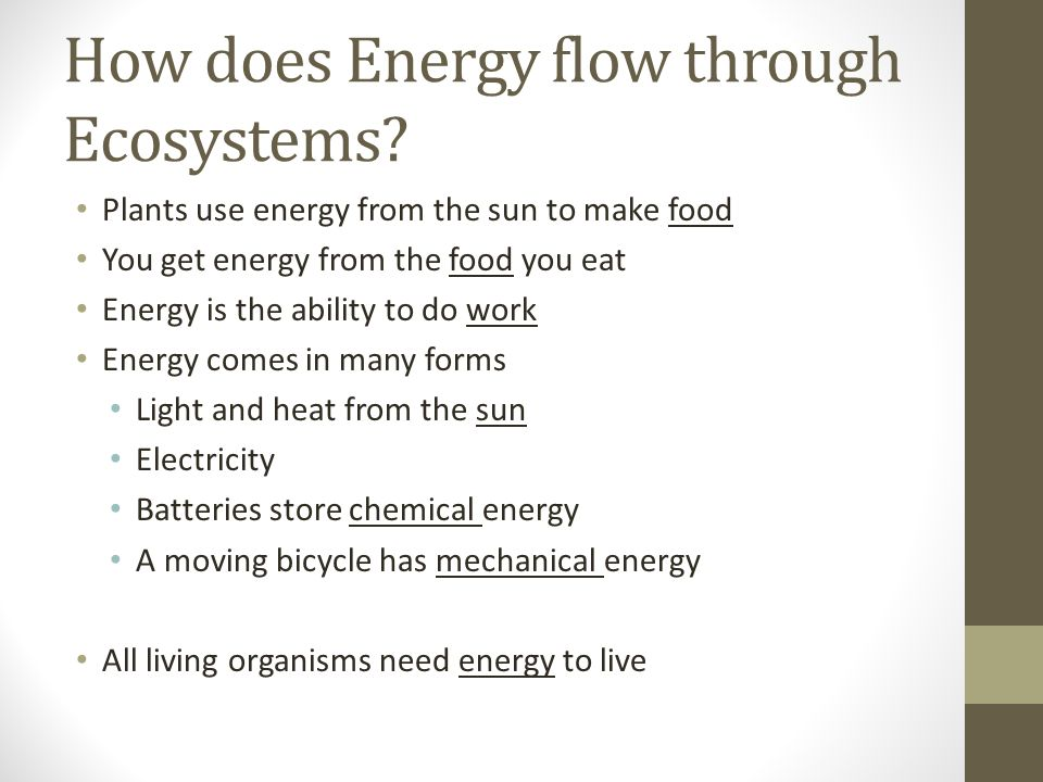 How does Energy flow through Ecosystems.