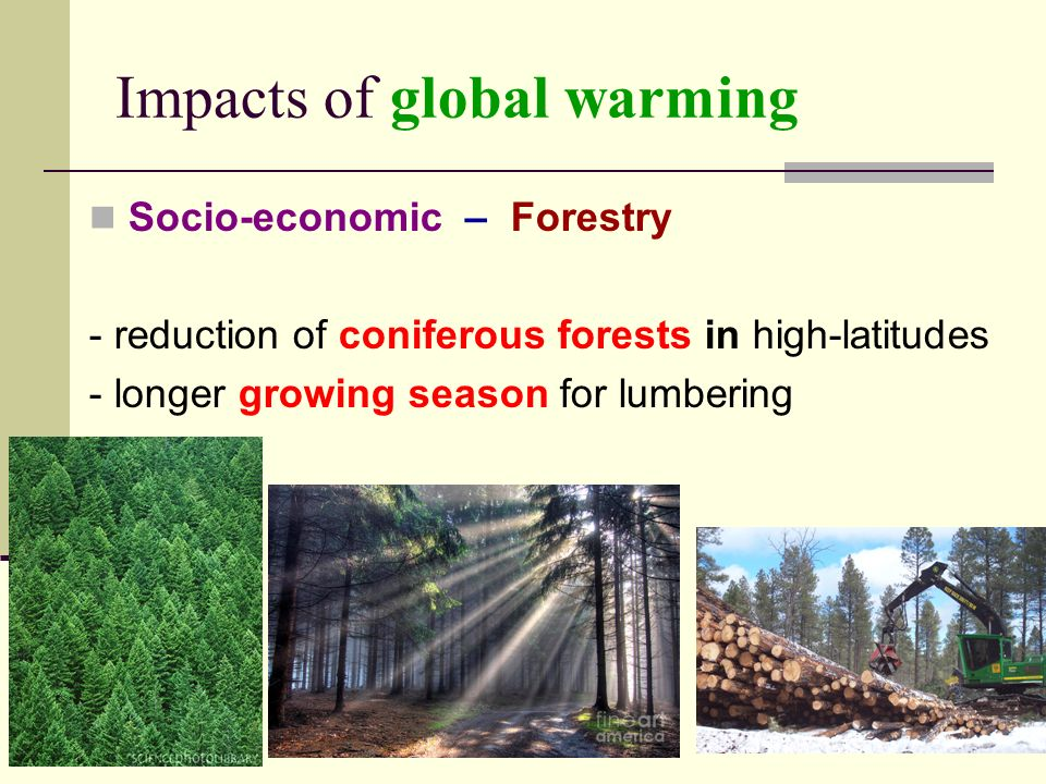Impacts of global warming Socio-economic – Forestry - reduction of coniferous forests in high-latitudes - longer growing season for lumbering