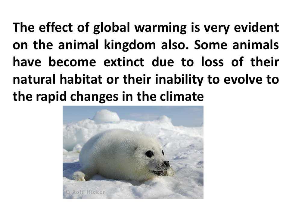 The effect of global warming is very evident on the animal kingdom also.