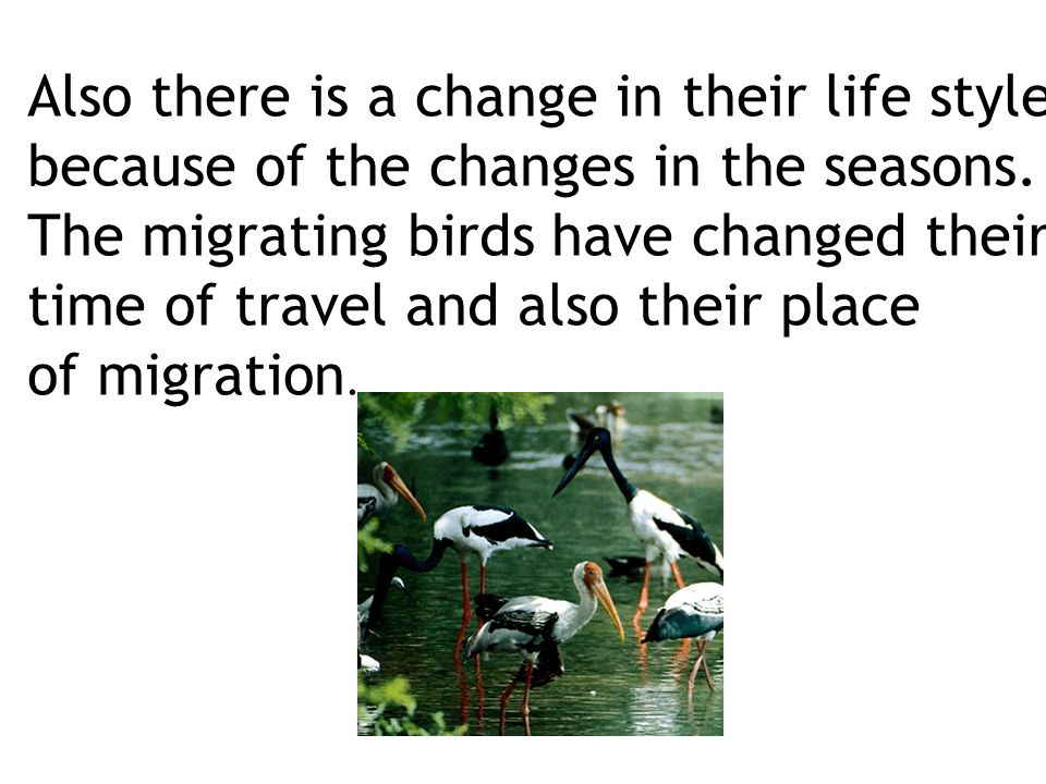 Also there is a change in their life style because of the changes in the seasons.