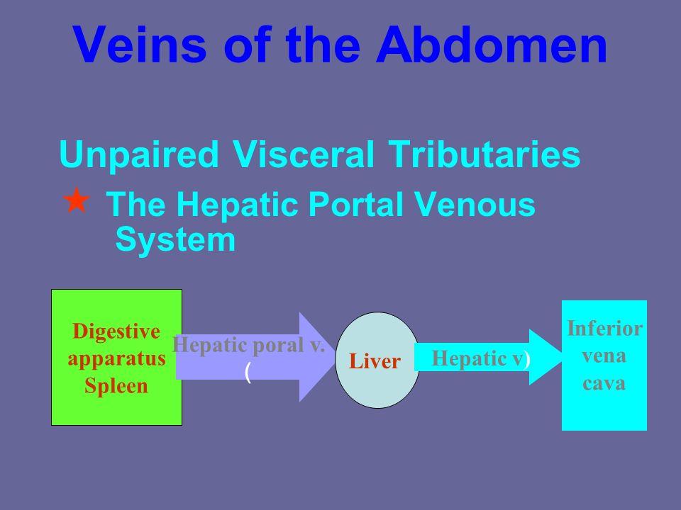 The inferior vena caval system Abdomen Pelvis Lower limb Internal iliac v. External iliac v. Common iliac v. Inferior vena cava Wall and paired viscer