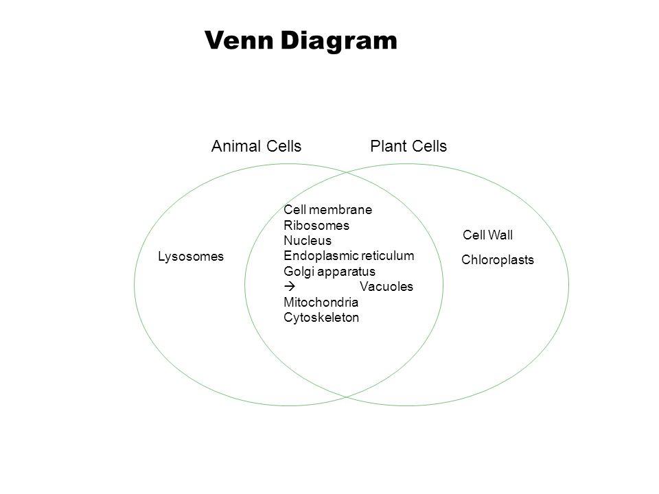 Endocytosis Vs Exocytosis Venn Diagram Leoncapers