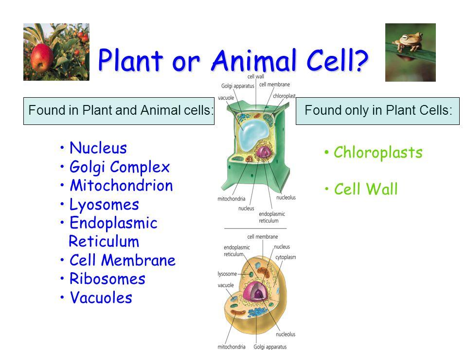 Reproduction  biology  Britannicacom