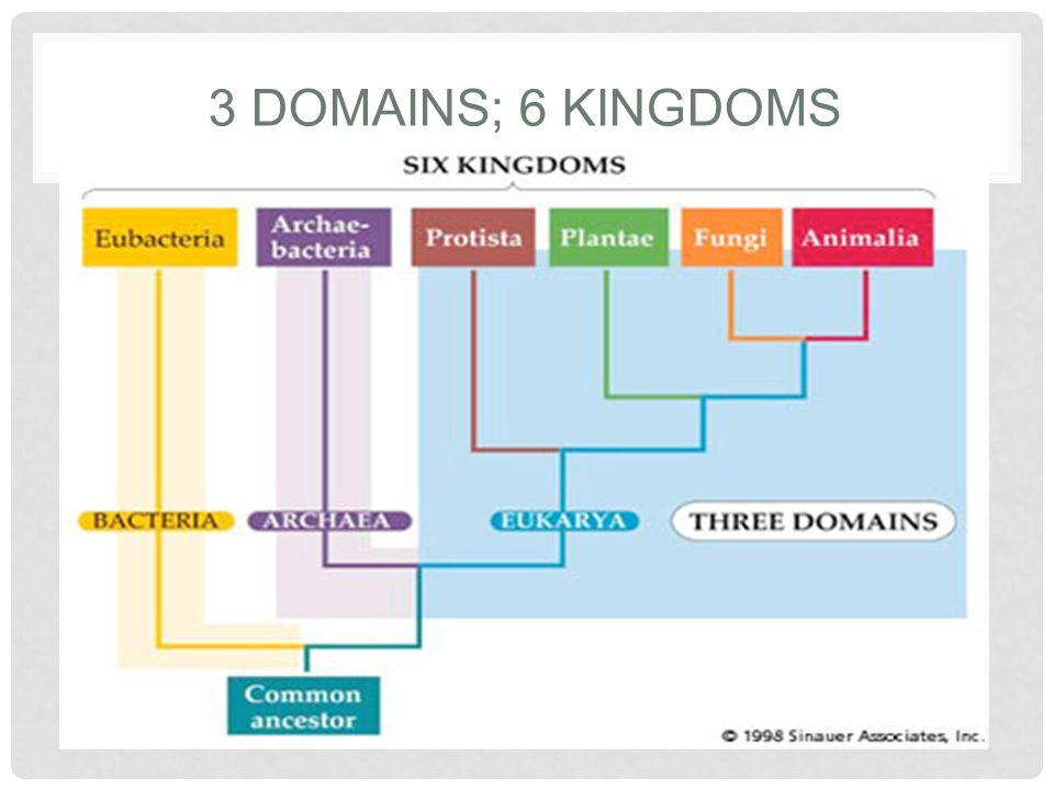 domains and kingdoms
