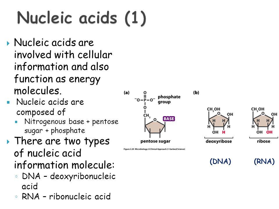 Ziemlich Is Microbiology Harder Than Anatomy And Physiology Bilder ...