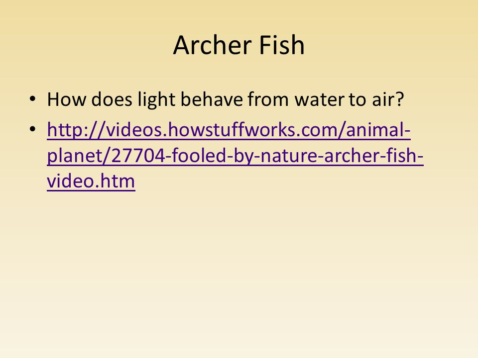 Archer Fish How does light behave from water to air.