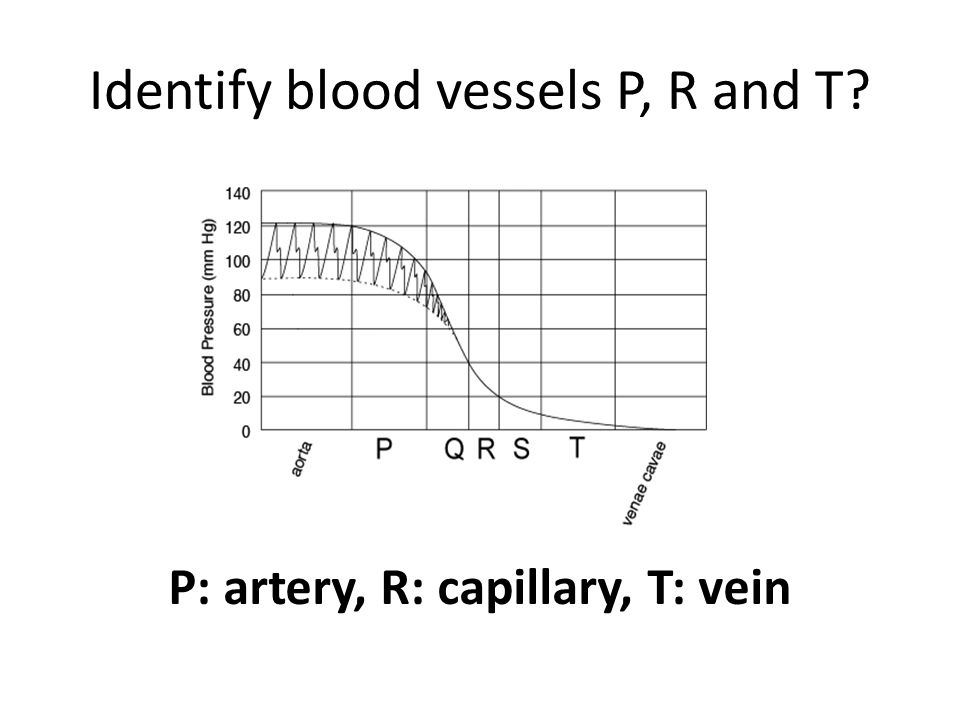 Identify blood vessels P, R and T P: artery, R: capillary, T: vein