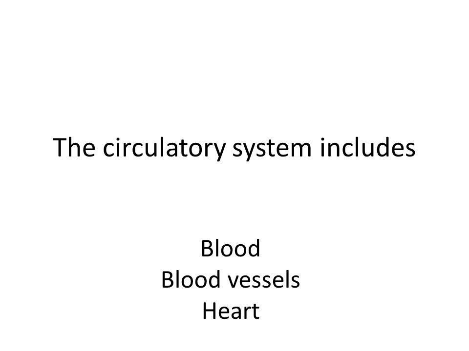 The circulatory system includes Blood Blood vessels Heart