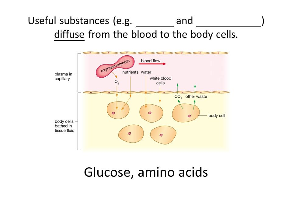 Useful substances (e.g. and ) diffuse from the blood to the body cells. Glucose, amino acids