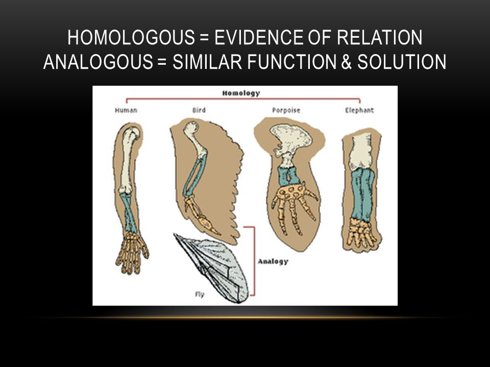HOMOLOGOUS = EVIDENCE OF RELATION ANALOGOUS = SIMILAR FUNCTION & SOLUTION