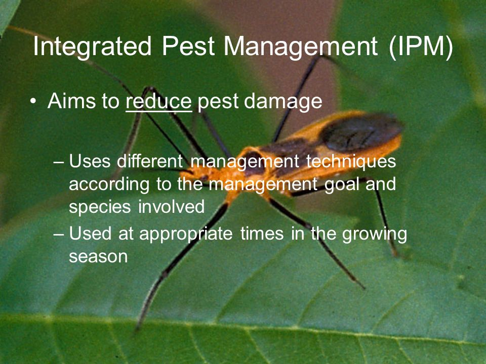 Integrated Pest Management (IPM) Aims to reduce pest damage –Uses different management techniques according to the management goal and species involved –Used at appropriate times in the growing season
