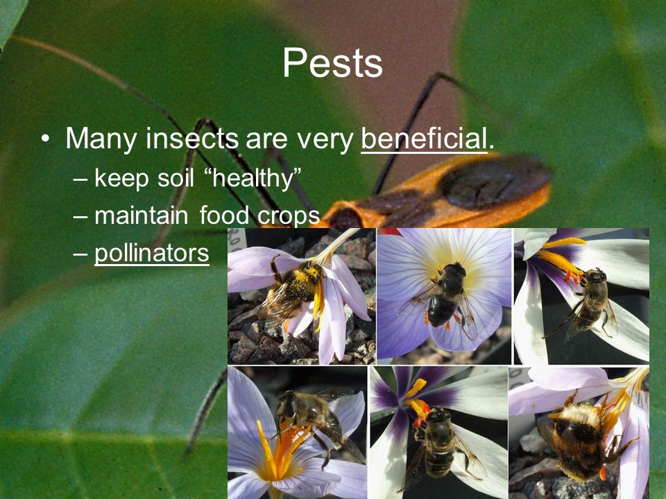 Pests Many insects are very beneficial. –keep soil healthy –maintain food crops –pollinators