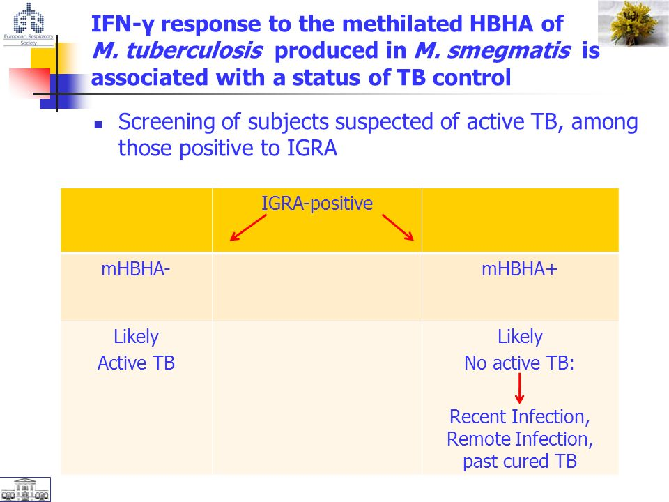 IFN-γ response to the methilated HBHA of M. tuberculosis produced in M.