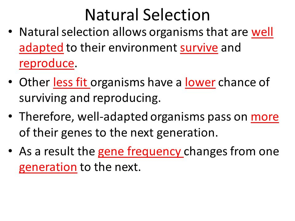 Evolution And Natural Selection Worksheets Worksheets For School – Natural Selection Worksheets