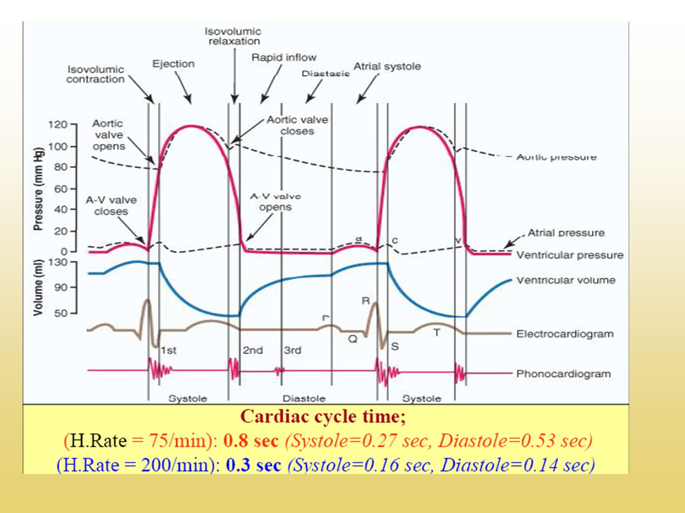 Wednesday 20th november copy objective to understand how the 17 describing the stages of the cardiac cycle now complete the cardiac cycle worksheet again by describing each stage in each of the diagrams using all pooptronica Choice Image
