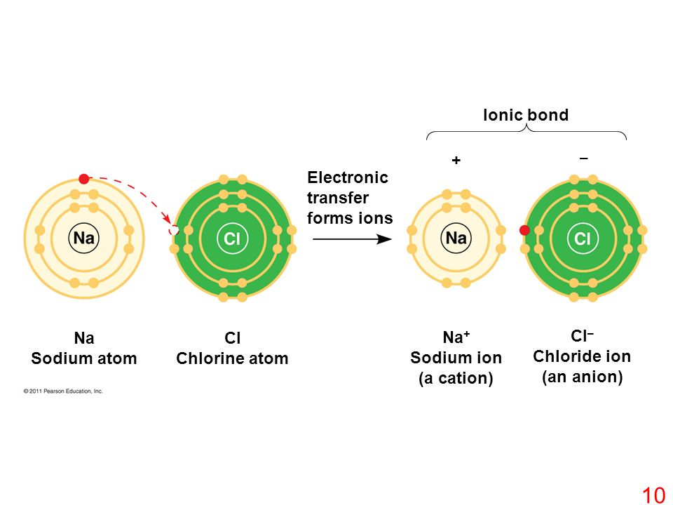 + – Na Sodium atom Cl Chlorine atom Na + Sodium ion (a cation) Cl – Chloride ion (an anion) Ionic bond Electronic transfer forms ions 10