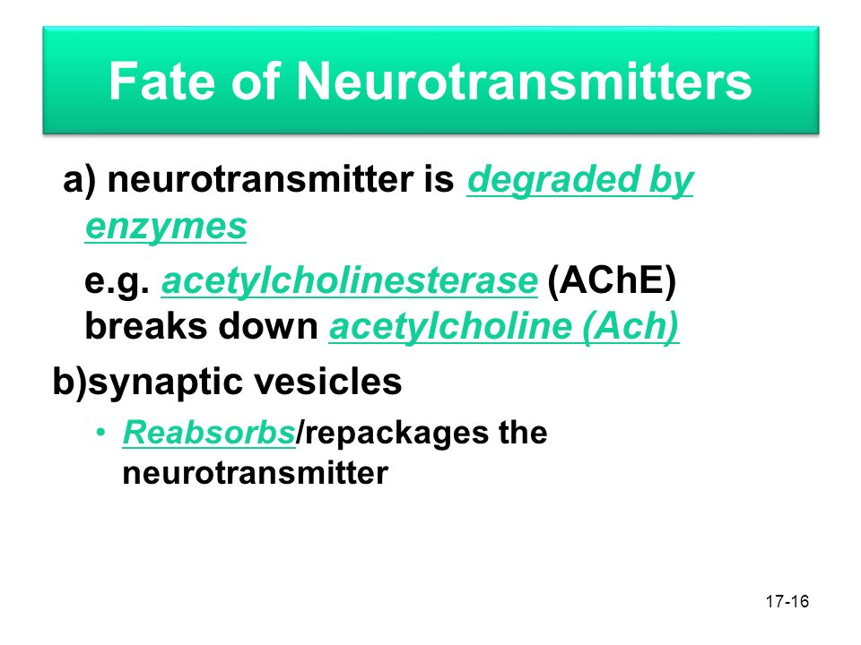 Fate of Neurotransmitters a) neurotransmitter is degraded by enzymes e.g.