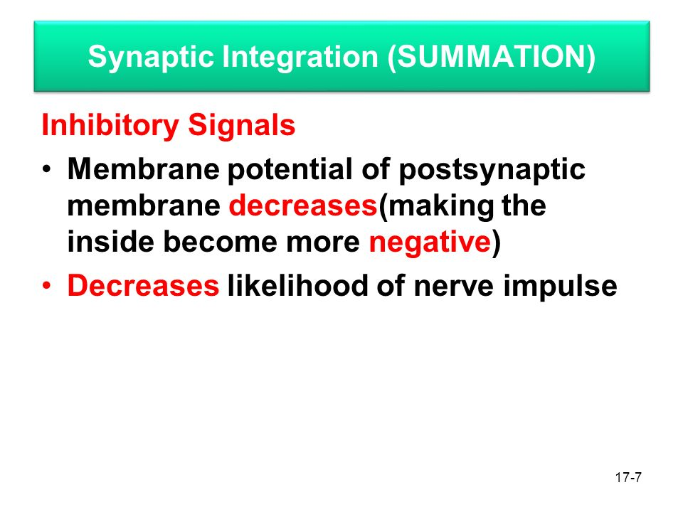 17-7 Synaptic Integration (SUMMATION) Inhibitory Signals Membrane potential of postsynaptic membrane decreases(making the inside become more negative) Decreases likelihood of nerve impulse