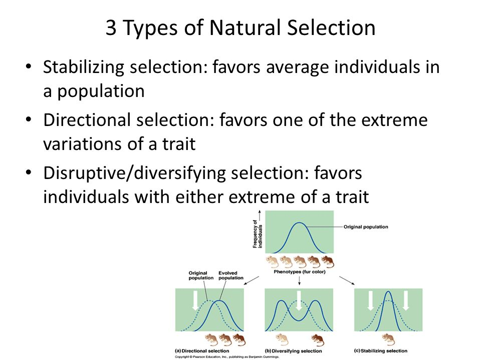 thesis about natural selection