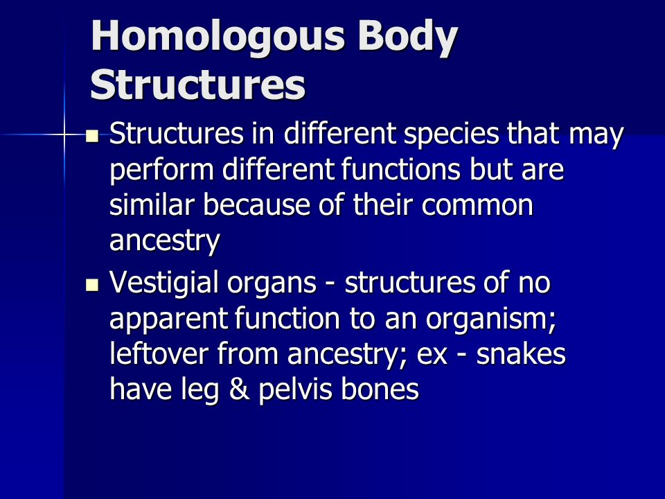 Homologous Body Structures Structures in different species that may perform different functions but are similar because of their common ancestry Structures in different species that may perform different functions but are similar because of their common ancestry Vestigial organs - structures of no apparent function to an organism; leftover from ancestry; ex - snakes have leg & pelvis bones Vestigial organs - structures of no apparent function to an organism; leftover from ancestry; ex - snakes have leg & pelvis bones