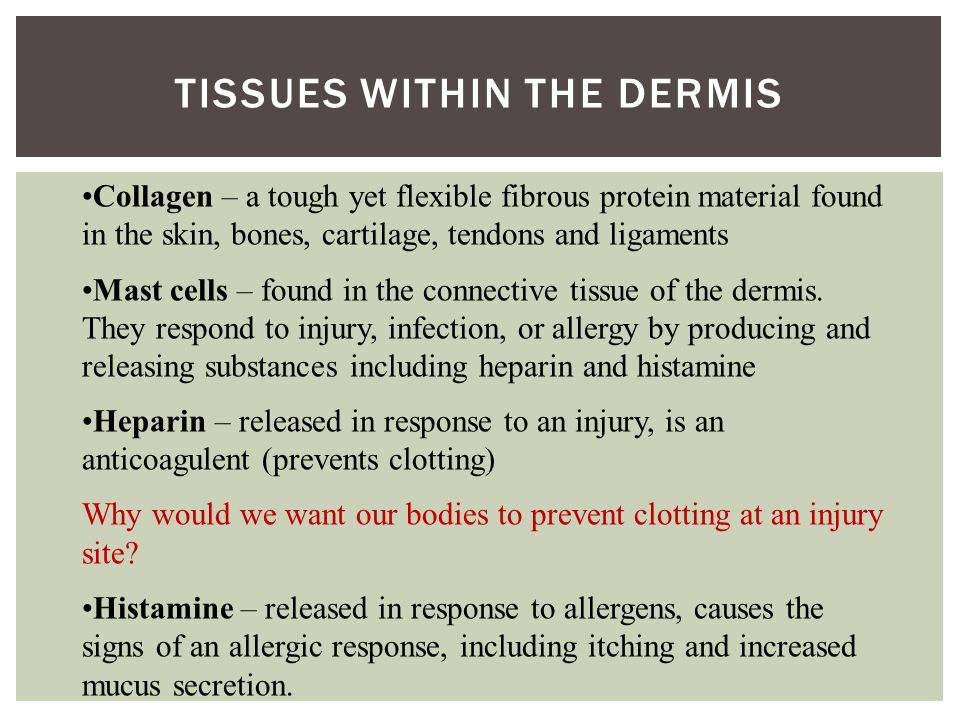 TISSUES WITHIN THE DERMIS Collagen – a tough yet flexible fibrous protein material found in the skin, bones, cartilage, tendons and ligaments Mast cells – found in the connective tissue of the dermis.