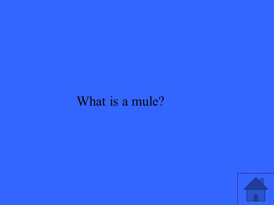 What is a mule