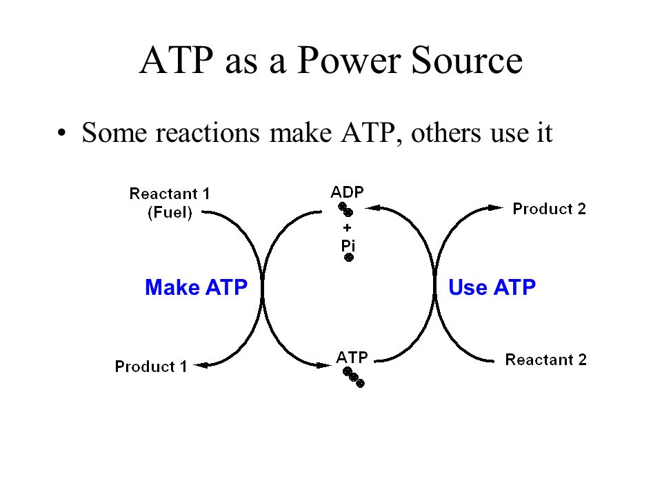 How Does Atp Provide Energy To Your Body - Ace Energy