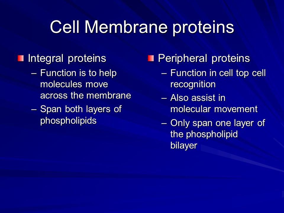 Cell Membrane proteins Integral proteins –Function is to help molecules move across the membrane –Span both layers of phospholipids Peripheral proteins –Function in cell top cell recognition –Also assist in molecular movement –Only span one layer of the phospholipid bilayer
