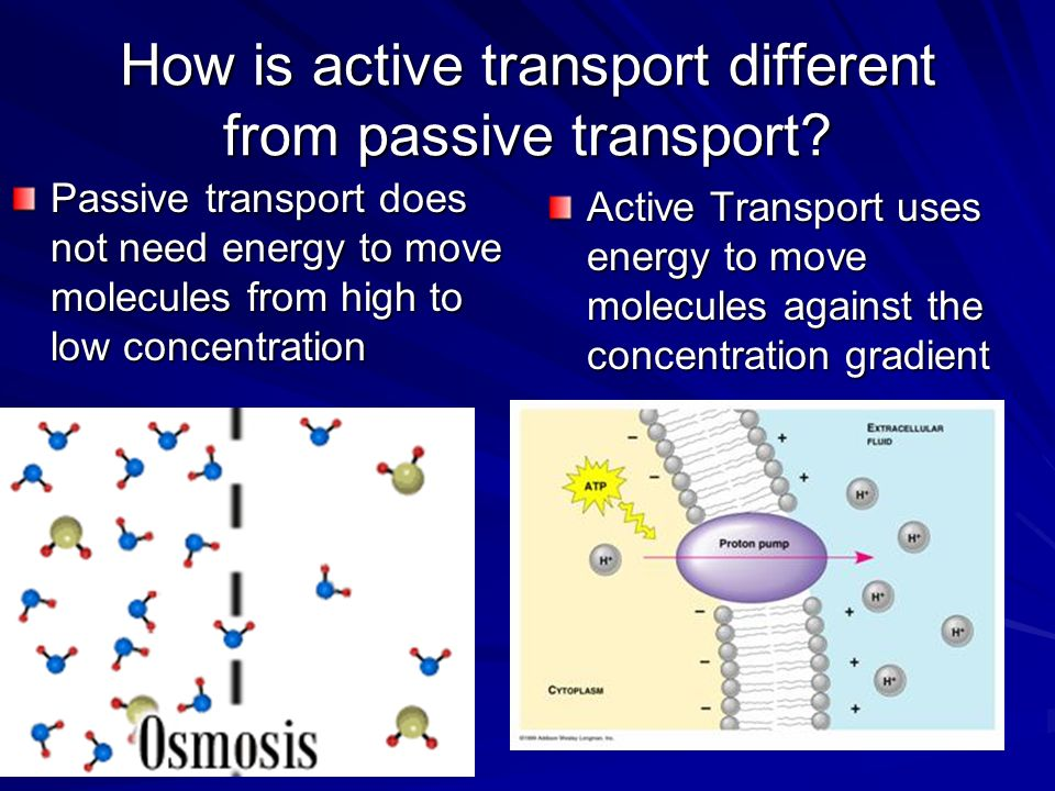 How is active transport different from passive transport.