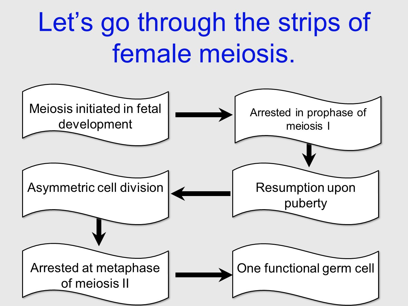 in essay format explain the function of meiosis 91 121 113 106 in essay format explain the function of meiosis