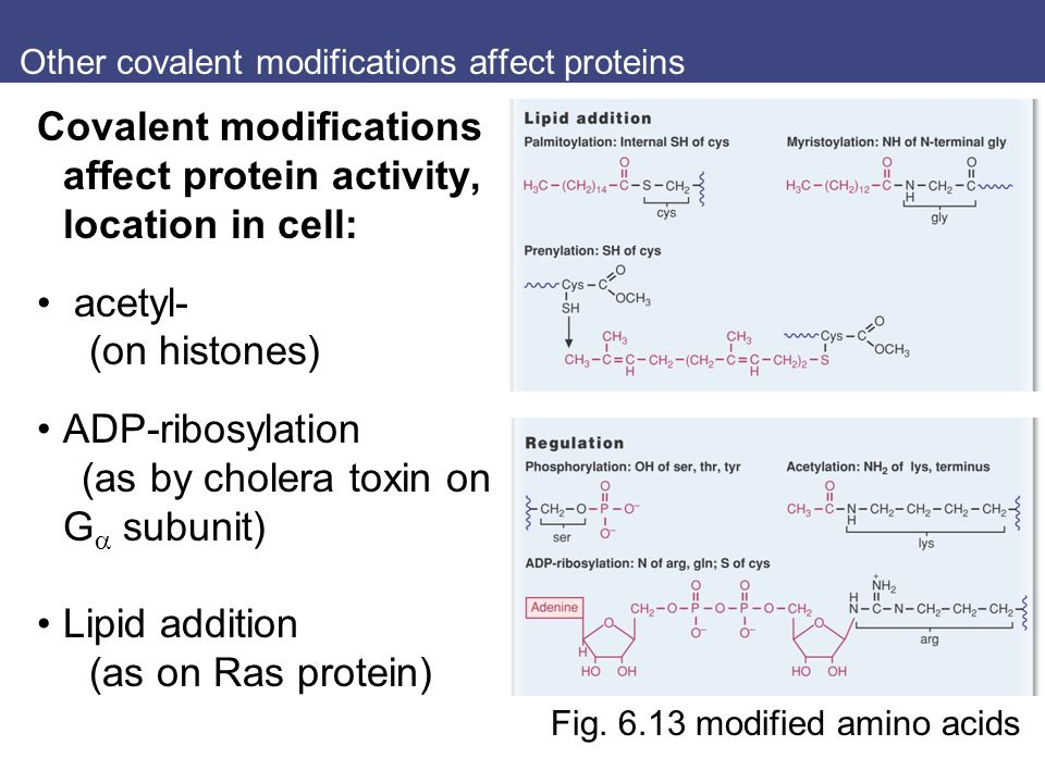 Other covalent modifications affect proteins Covalent modifications affect protein activity, location in cell: acetyl- (on histones) ADP-ribosylation (as by cholera toxin on G  subunit) Lipid addition (as on Ras protein) Fig.