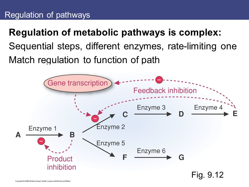 Regulation of pathways Regulation of metabolic pathways is complex: Sequential steps, different enzymes, rate-limiting one Match regulation to function of path Fig.