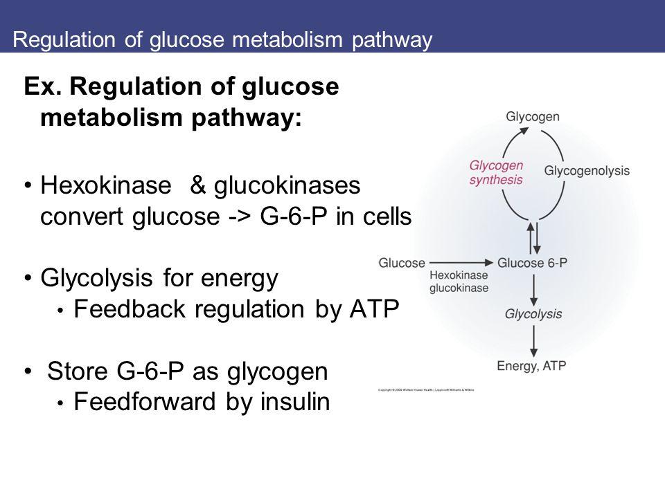 Regulation of glucose metabolism pathway Ex.
