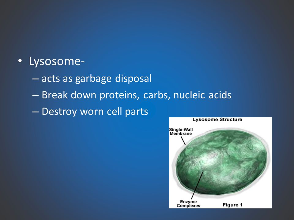 Cytology Study Of Cells 70 Trillion Human Body Ppt Download
