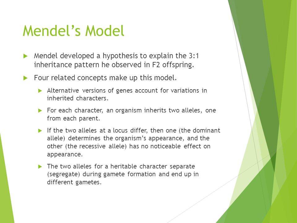 Mendel's Model  Mendel developed a hypothesis to explain the 3:1 inheritance pattern he observed in F2 offspring.