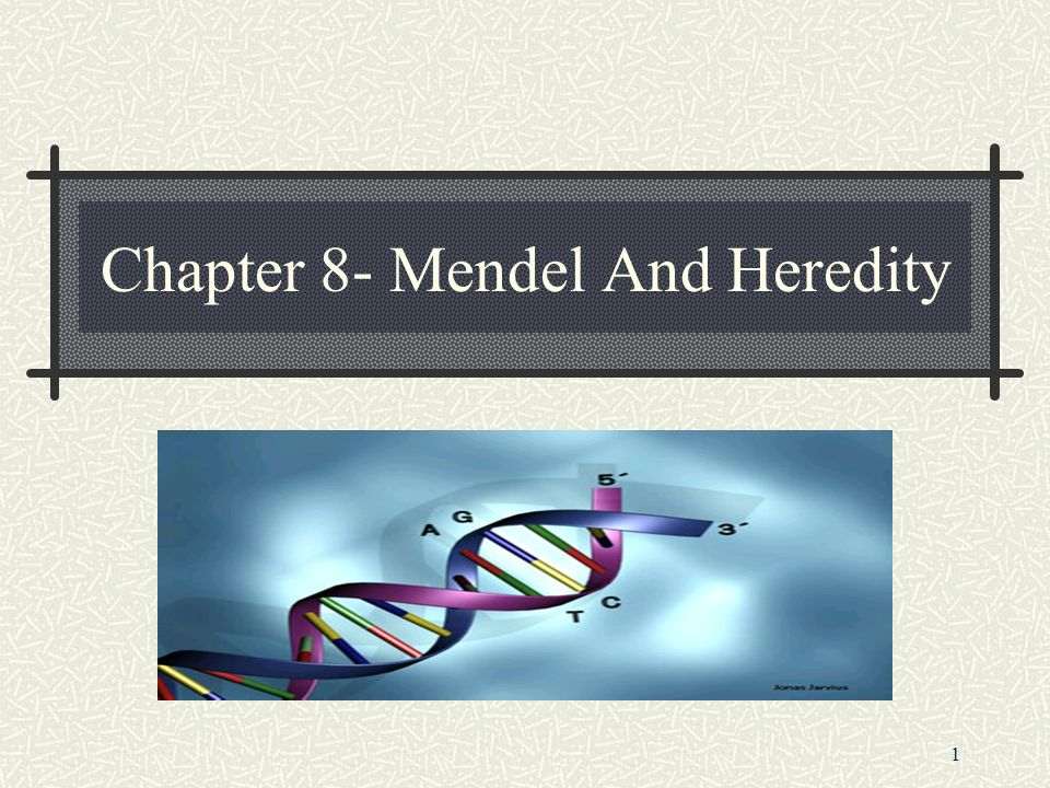 1 Chapter 8- Mendel And Heredity