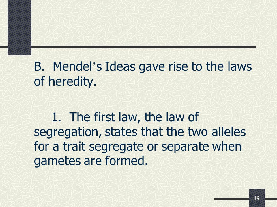 19 B. Mendel ' s Ideas gave rise to the laws of heredity.