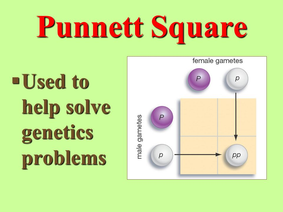 Punnett Square  Used to help solve genetics problems