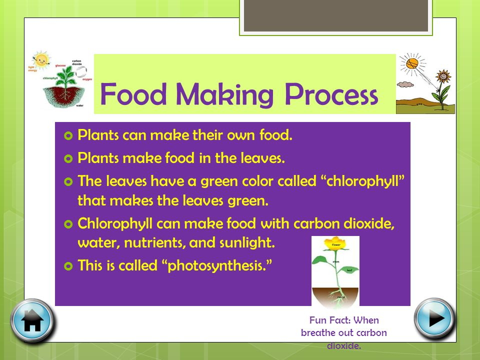 Food Making Process  Plants can make their own food.