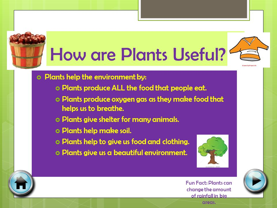 How are Plants Useful.