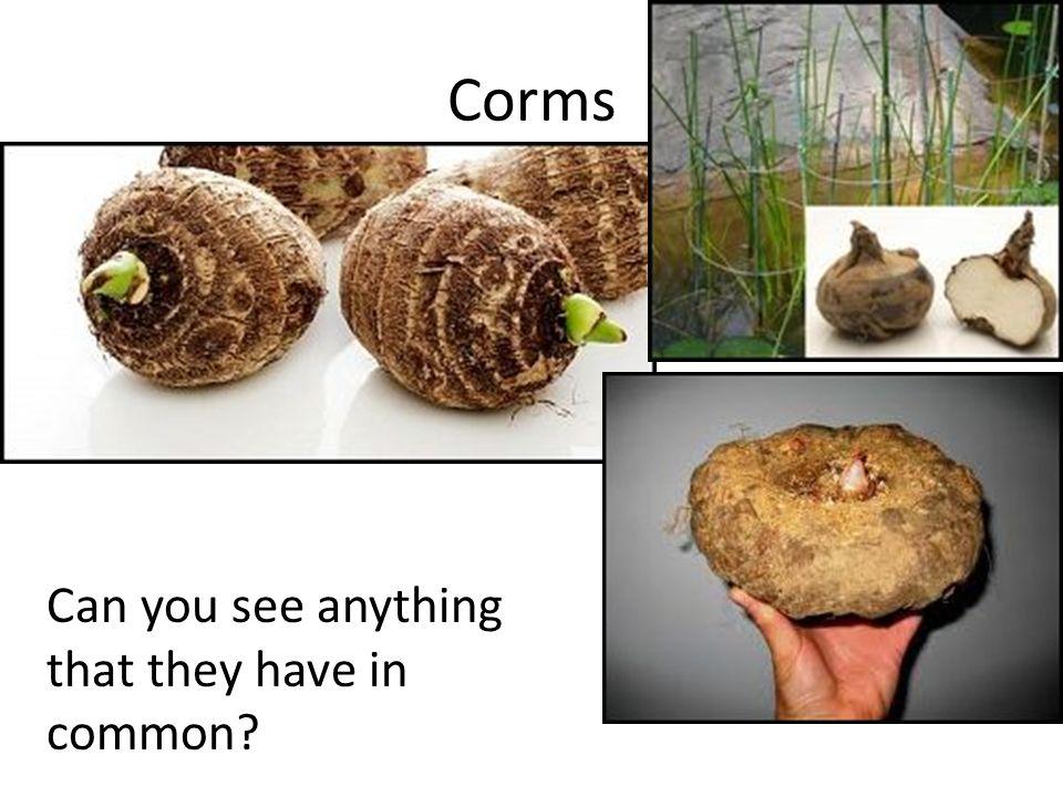 Image result for underground stems
