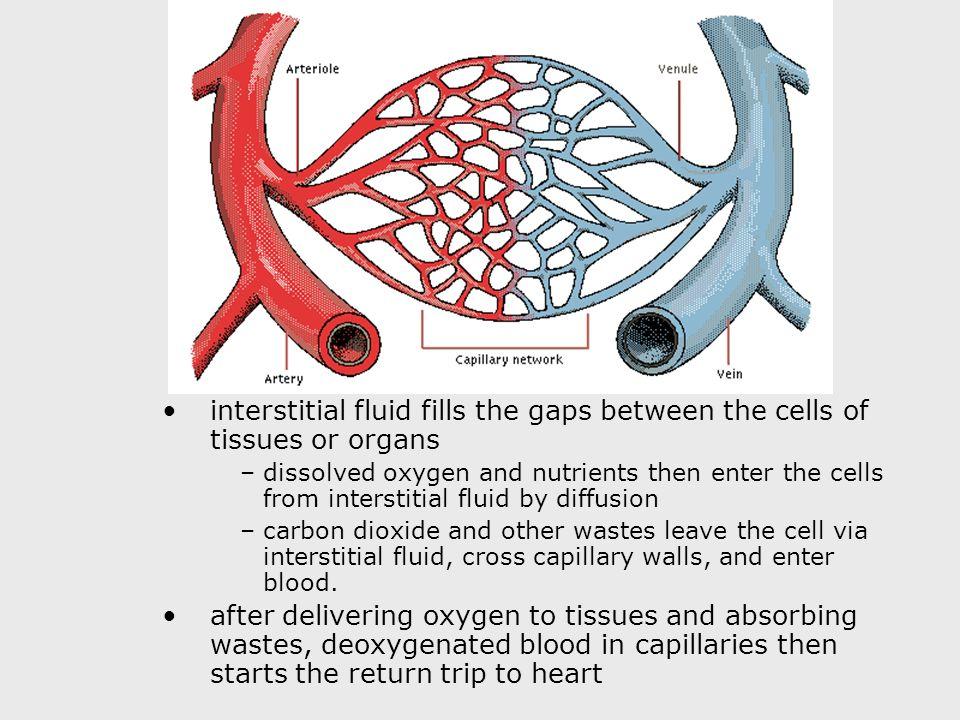 interstitial fluid fills the gaps between the cells of tissues or organs –dissolved oxygen and nutrients then enter the cells from interstitial fluid by diffusion –carbon dioxide and other wastes leave the cell via interstitial fluid, cross capillary walls, and enter blood.