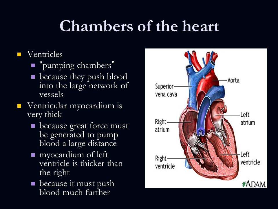 Anatomy of the cardiovascular system chapter 18 pages ppt download 6 chambers of the heart ventricles ventricles pumping ccuart Images