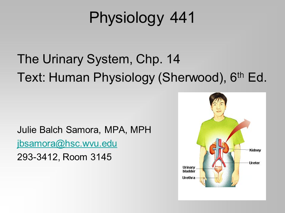 Physiology 441 The Urinary System, Chp. 14 Text: Human Physiology ...