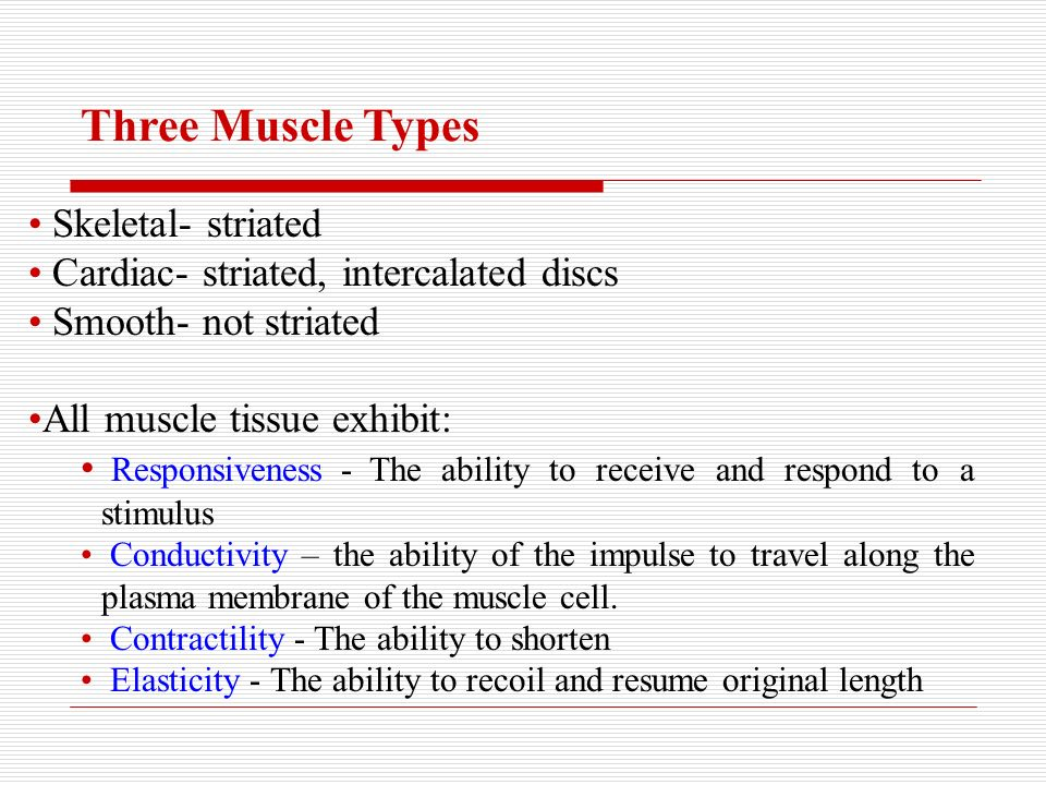 Structure And Function Of Skeletal Muscle Three Muscle Types