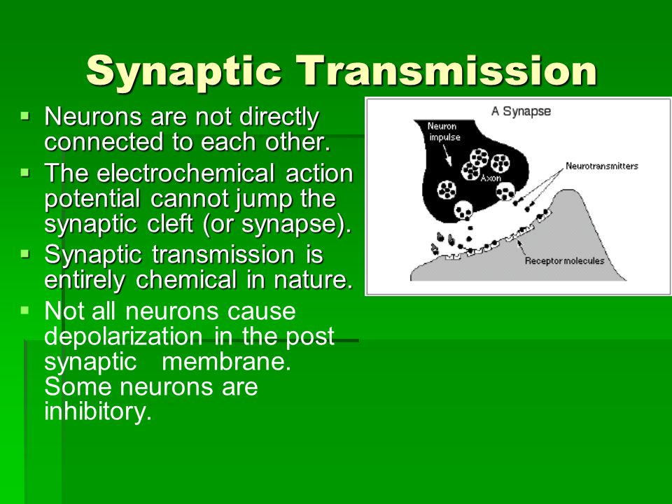 Synaptic Transmission  Neurons are not directly connected to each other.