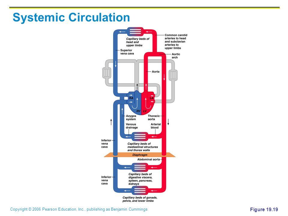 Copyright © 2006 Pearson Education, Inc., publishing as Benjamin Cummings Systemic Circulation Figure 19.19