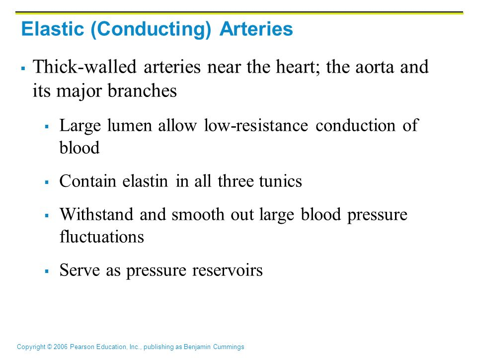 Copyright © 2006 Pearson Education, Inc., publishing as Benjamin Cummings Elastic (Conducting) Arteries  Thick-walled arteries near the heart; the ao
