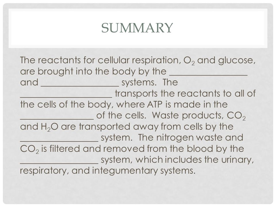 SUMMARY The reactants for cellular respiration, O 2 and glucose, are brought into the body by the _________________ and _________________ systems.