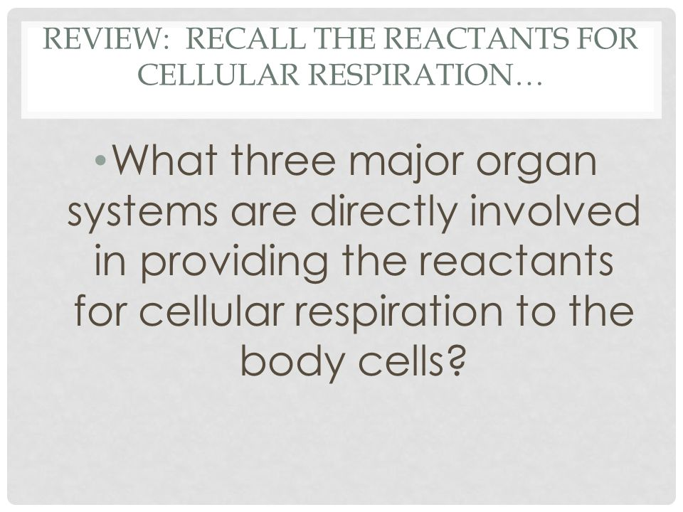 REVIEW: RECALL THE REACTANTS FOR CELLULAR RESPIRATION… What three major organ systems are directly involved in providing the reactants for cellular respiration to the body cells